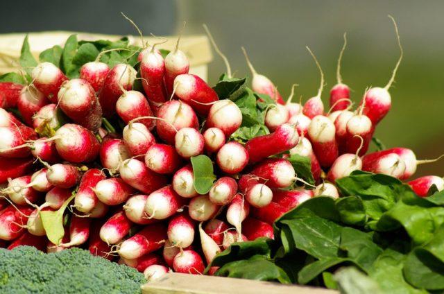 Velouté aux fanes de radis