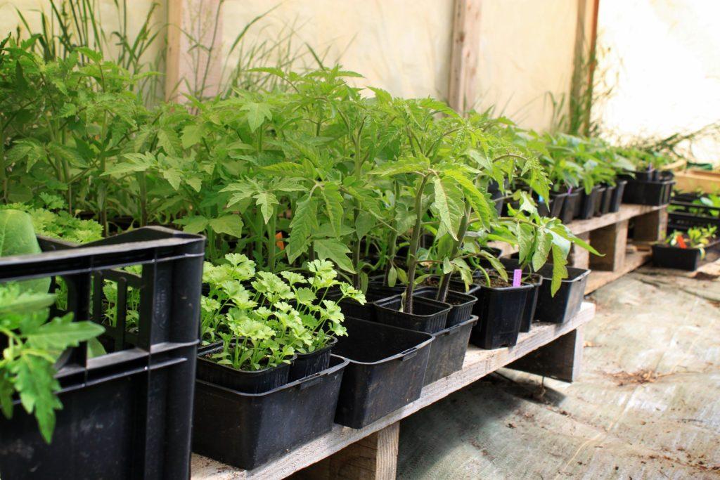 – Vente de plants CHANTEPIE – Le Jardin des Mille Pas